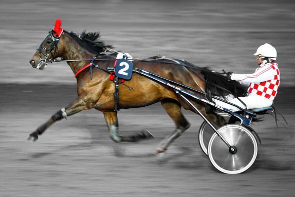 Hippodrome PetitStJean Wilfried Guillot