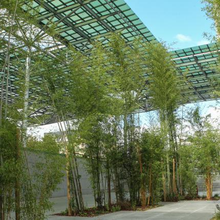 Bambouseraie place de la Gare