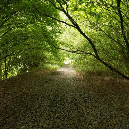 Chemin dans une forêt. Le sol est tapissé de feuilles mortes et les arbres forment un arche au dessus du chemin.