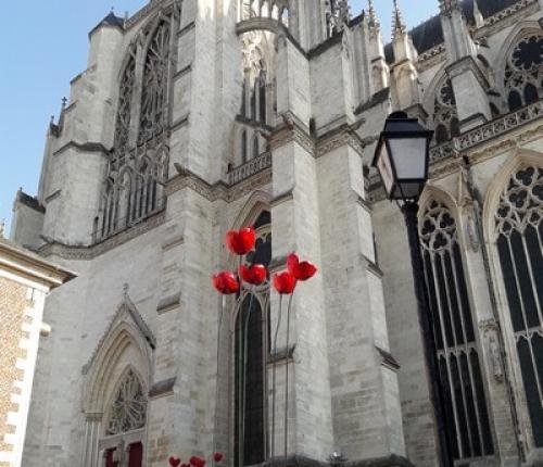 Cathédrale d'Amiens poppy